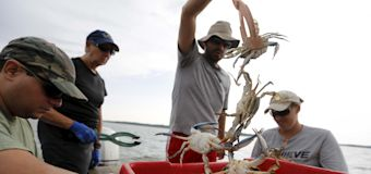 A dearth of landscapers, crabbers, restaurant help