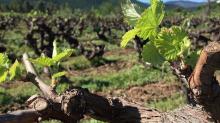 Los mejores destinos para amantes del vino 2019