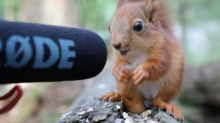 Photographer becomes foster mum to four adorable baby squirrels