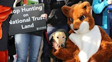 National Trust members narrowly vote against ban on trail hunting
