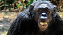 Animali: estate rovente anche al Bioparco Roma