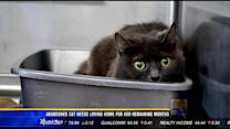 Abandoned cat needs loving home for her remaining months