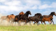 Akamai Stock Is a Wild Horse – Here's How to Tame It