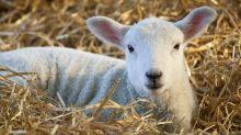 UK farmers sound alarm over Australia trade talks