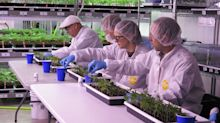 Pot-focused investment fund backed by Peter Thiel gets a boost from its big stake in Tilray