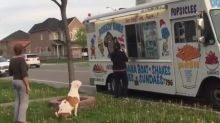 Pit Bull patiently waits his turn while in line for ice cream