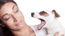 Come sbarazzarsi del cattivo odore del cane