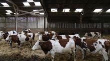 Crise sanitaire : la filière laitière veut réduire sa production en avril