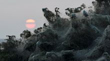 Massive Spider Webs Completely Cover Greek Beach In Surreal Photos