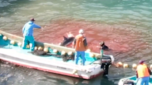 'Up to their waists in blood': New drone video exposes Japanese dolphin slayers