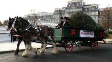POTUS and FLOTUS welcome the 2018 White House Christmas tree
