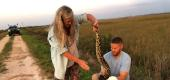Florida Fish and Wildlife Conservation Commission staff bag a Burmese python in the Everglades. (Reuters)