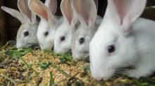 15 Largest Animal Feed Companies in the World