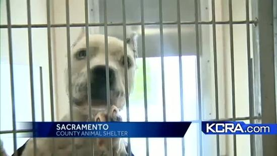 Sacramento offering free spay and neutering for some animals