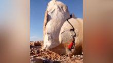 Nur mit Muskelkraft: Mann spaltet riesigen Felsblock