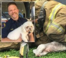 Firefighter Rescues Motionless Dog From Apartment Fire Using Mouth-To-Snout Resuscitation