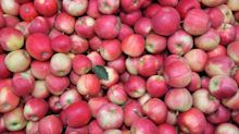 Berliner Forscher sind Apfel-Allergie auf der Spur