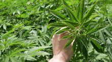 The 5 Keys to Success for Marijuana Stock Aurora Cannabis