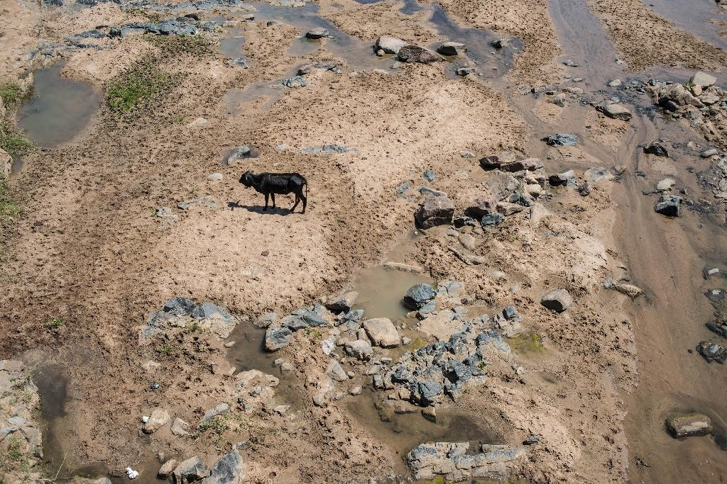 South Africa's drought, blamed on the global cyclical extreme weather system El Nino, is the country's worst since 1982 (AFP Photo/Mujahid Safodien)