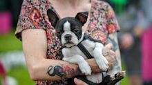 In pictures: Action-packed day at 'Glastonbury for dogs'