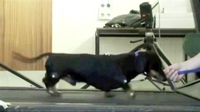 Doctors help paralyzed dog walk again