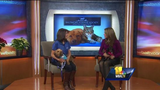 Adorable dogs up for adoption at Humane Society