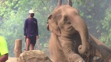Hungry times at Thailand's elephant sanctuaries
