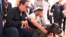 Cannes: la chienne du film de Quentin Tarantino récompensée par la Palm Dog