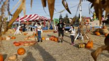 Local farms invest more in pumpkin patches, fall activities to drive traffic