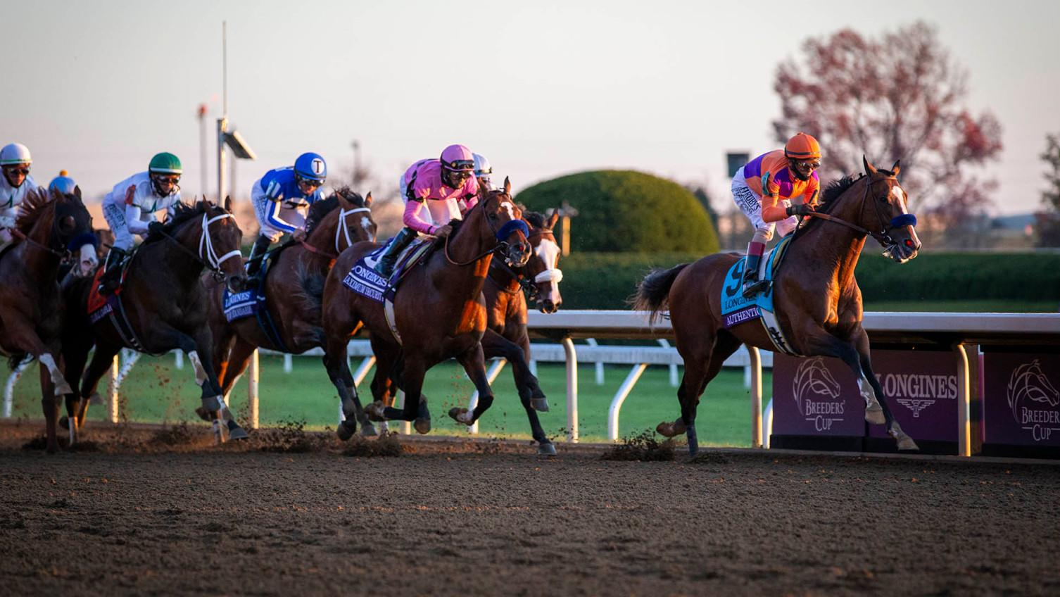 horse betting analyst review of ibm