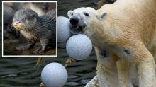 Struggling zoo 'plans to kill and feed animals to each other' amid coronavirus