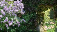 How to grow buddleia – and keep it blooming into autumn