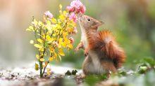 Frühlingsstimmung im Wald: Die zauberhaften Tierwelten von Julian Rad