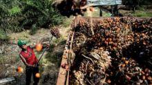 Olam announces third palm plantation to achieve RSPO certification