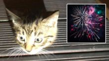 Firefighters rescue kitten stuck in precarious position after fireworks