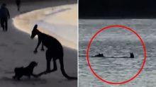Disturbing scene on off-leash beach highlights 'pretty horrible' issue