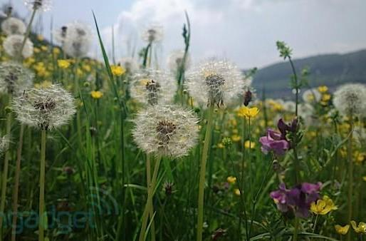 Nokia 808 PureView sample images: a moveable feast in 41 megapixels (updated with GigaPan galleries!)