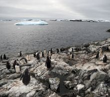 Deal struck for world's biggest marine reserve in Antarctica