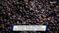 Too hot to handle:  Global warming hits coffee crop