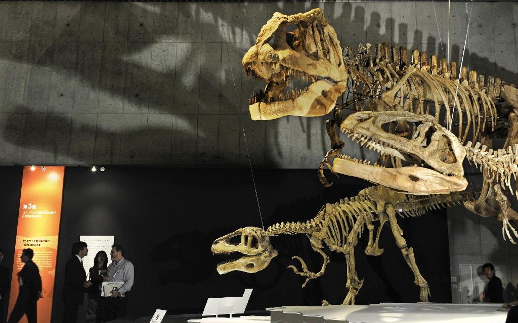 Dinosaur skeletons on display at Tokyo's Science Museum (AFP Photo/Kazuhiro Nogi)