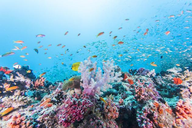 Global coral bleaching event may finally be ending