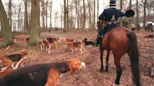 Pregnant woman mauled to death by dogs while walking in forest during hunt