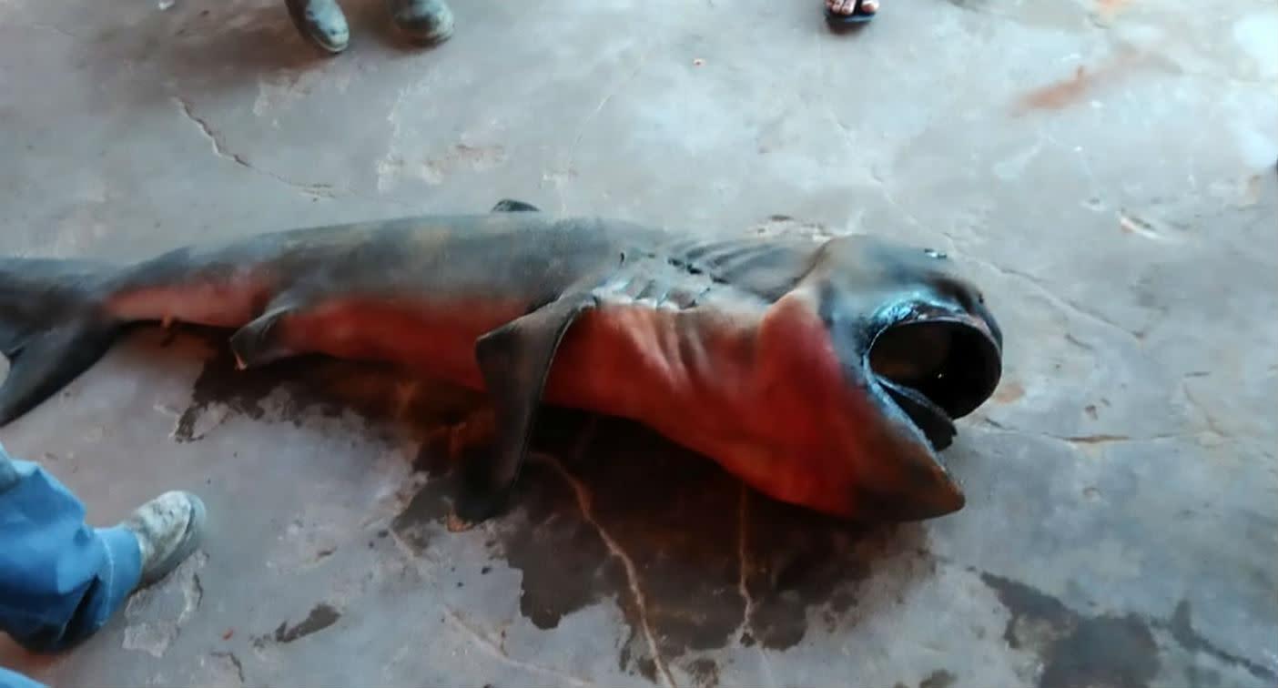 Fishermen catch bizarre rare shark and eat it