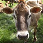 Coronavirus pandemic baking pushes Land O'Lakes' butter sales to a record year