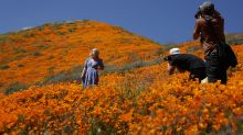 Mohnblüte in Kalifornien sorgt für extremen Besucheransturm