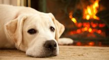 How to keep your pet warm and safe during winter