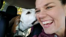 Someone has attacked this Iraq War veteran and stolen her service dog