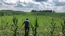 Crop Scouts Size Up a Tough Year on the Farm