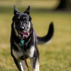 First dog Major to get extra training after White House biting incidents