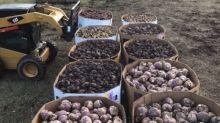 Alberta farmer donates 10,000 kgs. of root vegetables to food banks
